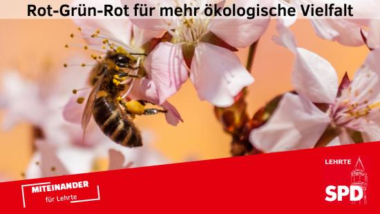 210312 RGR Bienen Web